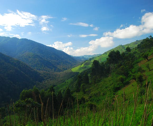 When to visit Bwindi Impenetrable National Park