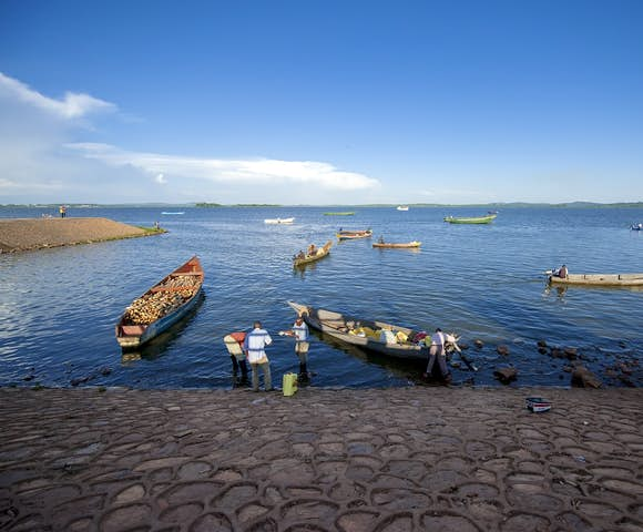Lake Victoria supports a plethora of wildlife, from hippos to freshwater crabs.
