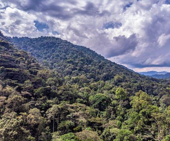 Bwindi Impenetrable National Park Weather